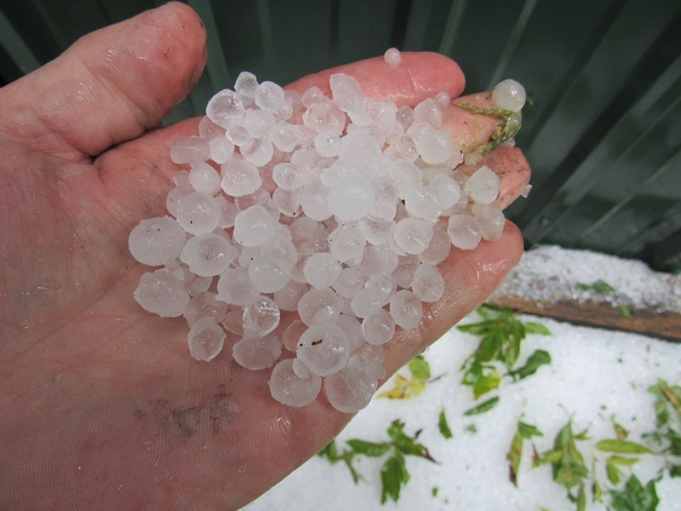 Hail that fell in the Viola area according to Dean Young, who sent us this photo.