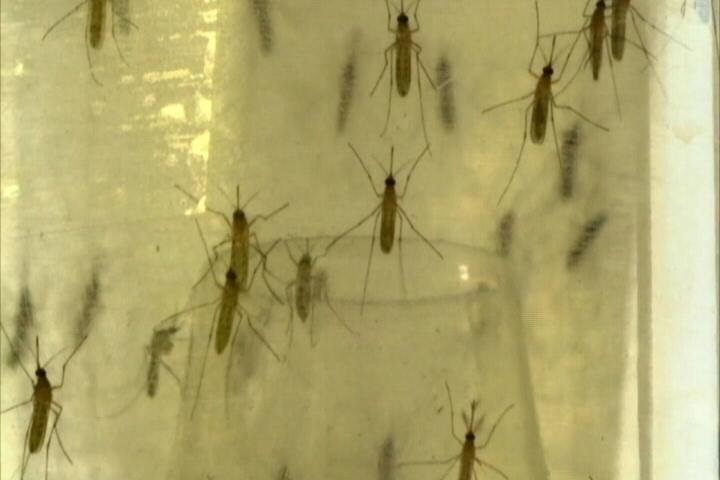 Blaine County trapping mosquitoes for West Nile virus testing