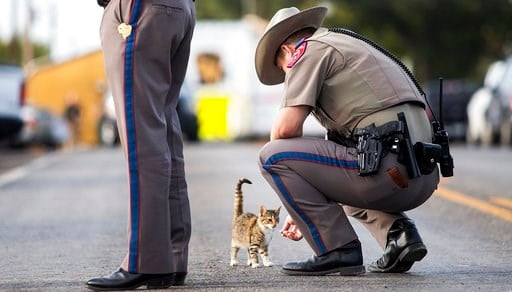 (Nick Wagner/Austin American-Statesman via AP) A Texas state trooper pets a cat outside the First Baptist Church in Sutherland Springs, Texas, on Monday, Nov. 6, 2017, the day after a gunman killed more than two dozen people.