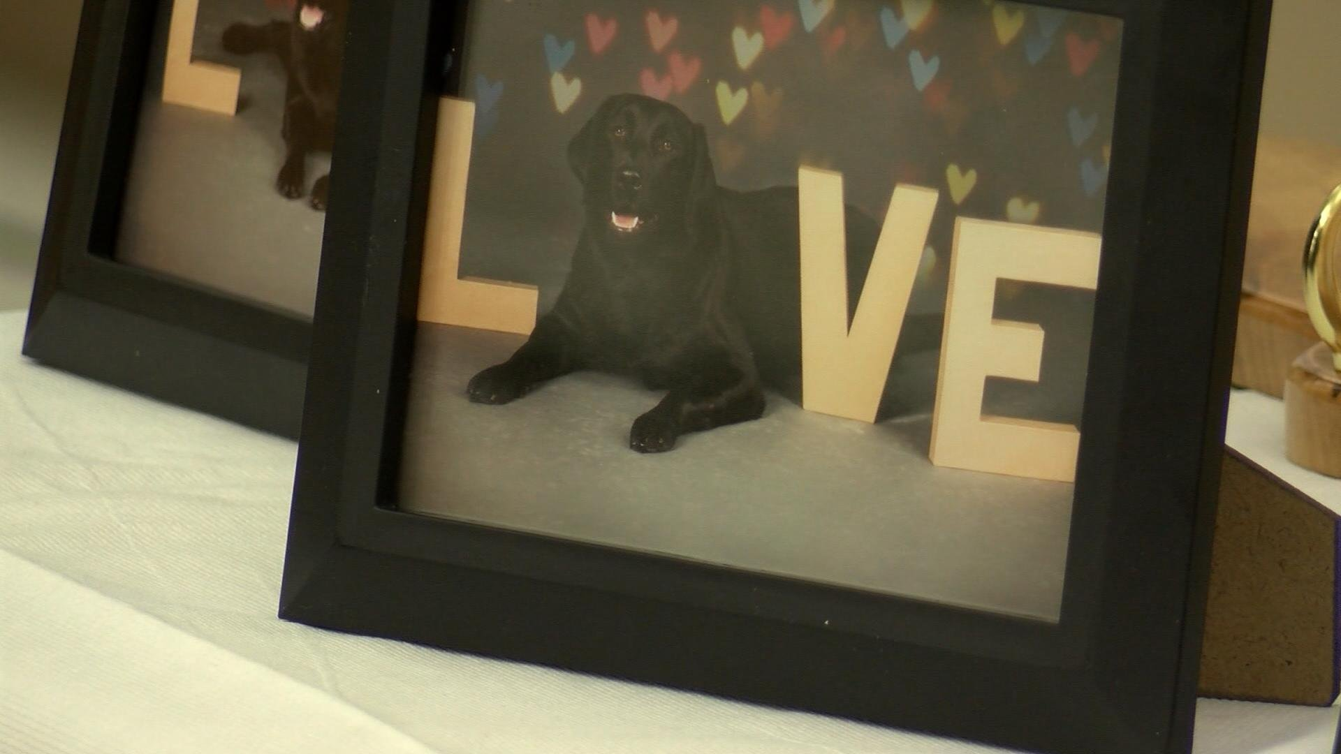 Photos of the service dogs displayed on a table.