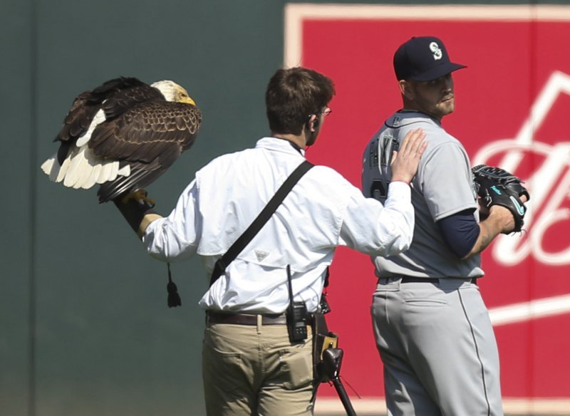 The handler for an American eagle that was to fly to the pitcher's mound during the national anthem pats Seattle Mariners starting pitcher James Paxton, a Canadian, after the eagle chose to land on his shoulder instead. (Jeff Wheeler/Star Tribune via AP)