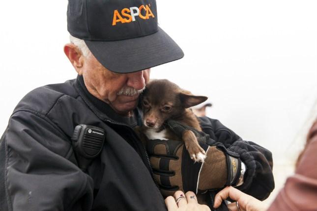 Photos provided by ASPCA