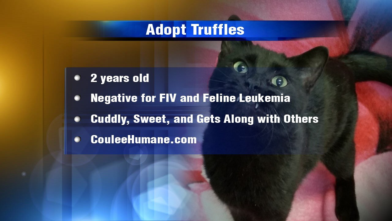 Coulee Region Humane Society Cats