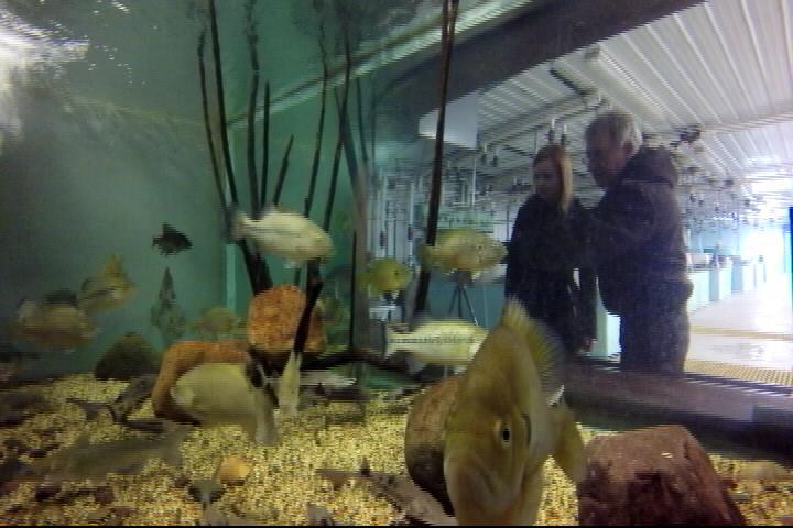 Genoa fish hatchery works to restore population ktiv for Iowa fish hatcheries