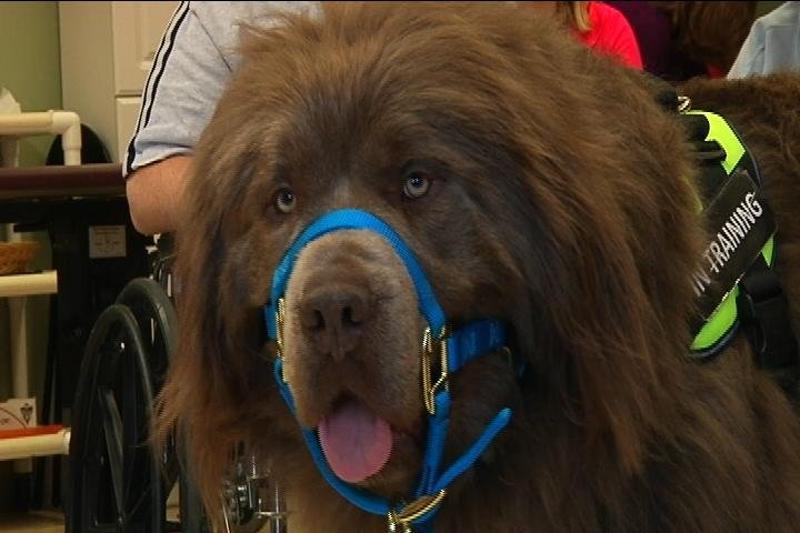 Therapy Dog Training Central Illinois