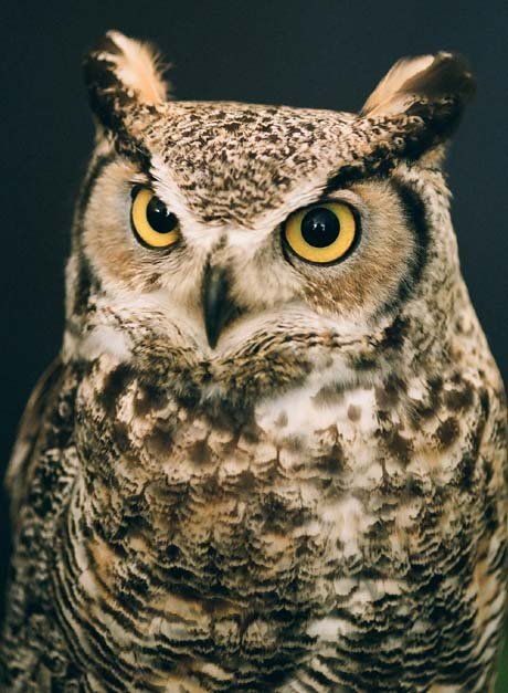 Late Winter Takes A Toll On Owl Population Wxow News 19